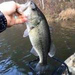"""Crowe's Corner"" Warm November Bass Fishing Trip 11/17/15"